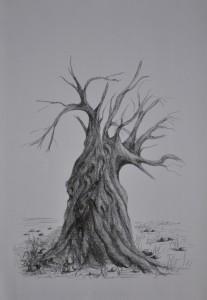 Dead olive tree