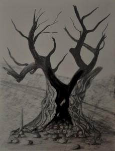 1712_Old olive tree_com